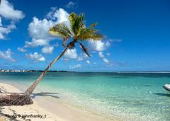 The solitary -Guadeloupe (johnfranky_t) Tags: palma cocco bagnasciuga johnfranky t panasonic lumix tz5 panorama guadalupa guadeloupe caraibi palm mare radici roots racines foreshore