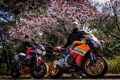 IMG_2442 (HoragamePhoto) Tags: sakura speedtriple