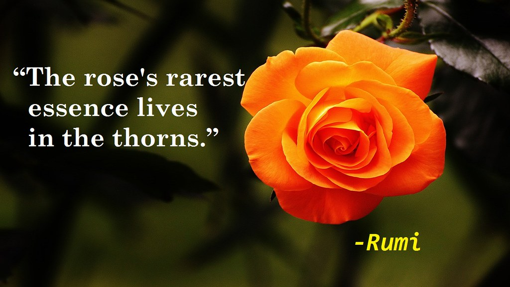 The Worlds Best Photos Of Quotes And Rumi Flickr Hive Mind