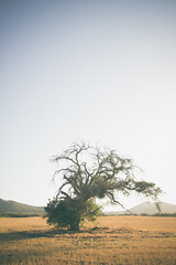 tree (kcinf) Tags: sunset tree green film up field canon hair photo tim back wire model eyes flickr close emotion feel creative hills again come times through each 2013 t2i vsco