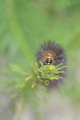 Well, Hello There (MaryMakesDinner) Tags: insect caterpillar