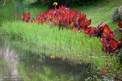 Park (AngelikaBentin) Tags: park see shanghai pflanzen pudong ufer schilf weiher ruhe flus