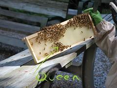 West 104 Garden Bees