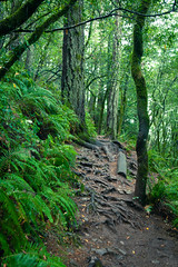 Miur Woods, Marin County California (Chicago_Tim) Tags: miur woods marin county california northern forest green nature trees sequoia redwood preserve