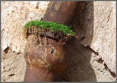 Bchinger Rost 1 (fotomnni) Tags: rust rusty rost rostig
