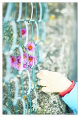 October 11 Outtake (3) (Vlachbild) Tags: nature germany person europe natur pedestrian daily human trier passant pfalzel mensch naturephotography fussgänger rhinelandpalatinate outdoorphotography borderfx fusgänger minoltaaf100mmf2 sonyslta99