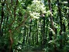 Forest wallpaper (Infoway LLC - Website Development Company) Tags: wallpaper beautiful wonderful nice superb awesome images exotic hd illustrator incredible breathtaking classy bambooforest mindblowing dryforest amazonrainforest greenforest winterforest forestwallpaper woodforest junglewallpaper sunsetwallpaper islandwallpaper summerforest responsivewebsitedesign subtropicalforestwallpaper waterfallintropicalforest responsivewebdesigncompany mountainsnowforest yellowredautumnforest tropicaldesertisland tropicalforestwithriver
