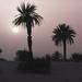 Libya - evening in the dunes.