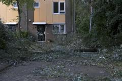 Buikslotermeerdijk na de storm (Guda G) Tags: storm stadsarchief amsterdamnoord buiksloot buikslotermeer