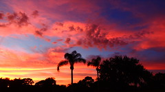 Halloween Sunset (Jim Mullhaupt) Tags: blue sunset red wallpaper sky tree halloween yellow night clouds flickr florida palm bradenton mullhaupt jimmullhaupt
