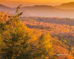 Autumn Warmth (augphoto) Tags: autumn trees mountains fall nature leaves outdoors us unitedstates scenic northcarolina blueridgeparkway oldfort augphotoimagery