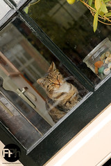 The Cat in the Window (Frankhuizen Photography) Tags: street window netherlands amsterdam cat photography kat poes raam the 2013
