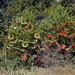 Trees_of_Loop_360_2013_275