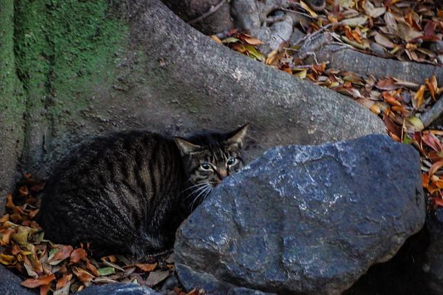 Today's Cat@2013-12-12