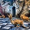 #فوتوشوب_الطبيعة #قطط #Photoshop_Nature #Cats at #Rommanah - #Jenin - #Palestine Dec 23 2013 #Photography | @Saleh4One FB Page | SalehJPro