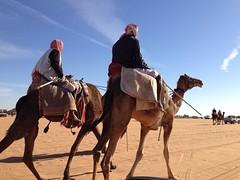 / (Salem_photos) Tags: desert camel um  fesival          uploaded:by=flickrmobile flickriosapp:filter=nofilter rogaibah