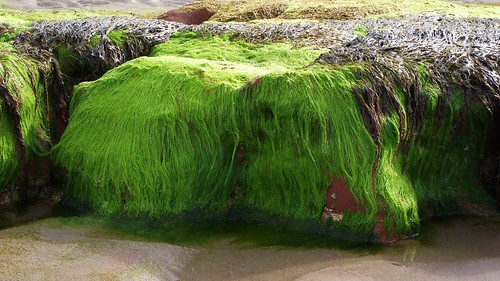 green, hairy geology