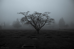 cemetery by the moon unblessed (bluechameleon) Tags: sharonwish bluechameleon bluechameleonphotography bw cemetery fog graves headstones moody mountainviewcemetery night trees blackandwhite artlibre