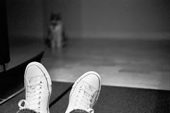 Reluctant (stumble) Tags: sanfrancisco me cat 50mm kitten kodak alice olympus 400tx converse allstars om2n