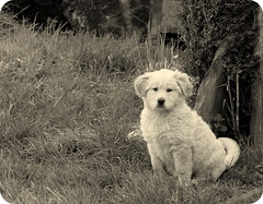 Copi (Fotos de vida.) Tags: blackandwhite dog pet blancoynegro animals perro galicia animales lugo mascota