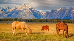 horses grazing (Marvin Bredel) Tags: light sky horses mountains clouds bravo unitedstates wyoming tetons moran jacksonhole grandtetonnationalpark elkflats marvinbredel