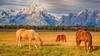 horses grazing (Marvin Bredel) Tags: light sky horses mountains clouds bravo unitedstates wyoming tetons moran jacksonhole grandtetonnationalpark elkflats marvinbredel