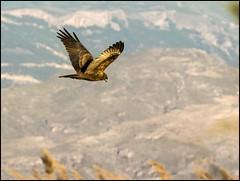 (Adisla) Tags: olympus ave f2 em1 volar 150mm zd150mm