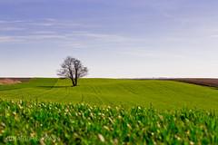 IMG_1510 (Artsianko) Tags: windows tree spring sunnyday windows8