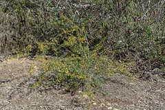 140212_2552.jpg (Weeding Wild Suburbia) Tags: park gardens publicgardens spnp