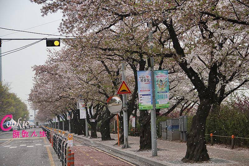 韓國 (6)