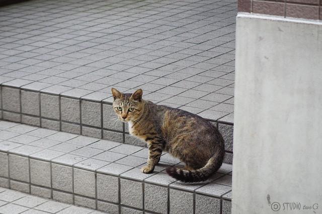 Today's Cat@2014-05-30