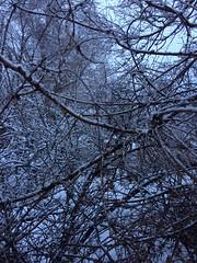 IMG_2186 (augiebenjamin) Tags: winter provocanyon mountains orem provo lindon utah snow clouds trees sky byu brighamyounguniversity art