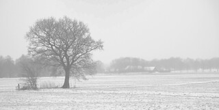 high key winter landscape