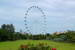 Singapore Flyer ferris wheel seen from the Gardens by the Bay (UweBKK (α 77 on )) Tags: singapore southeast asia island city state urban sony alpha 77 slt dslr flyer ferris wheel architecture structure building gardens by bay lawn green grass bushes bush tree sky grey clouds