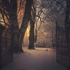 Temptation (M a r i k o) Tags: iphone iphone6s iphonephotography mobile mobilephotography mariko sqaure gate open tor winter cold sunset light trees snow crow bird erding notzing schlossnotzing oberding bayern bavaria germany procamera hdr snapseed superimpose mextures