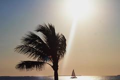 Canon2017.03.17 2186 (seahorse19911) Tags: birds brittanyanddadsvisit canon20170317 florida floridakeys sunset beach