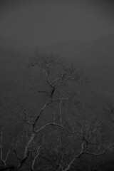 When dead spreads beauty (al_amin9622) Tags: bandarban travel deadtrees beauty