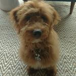 Addie's past puppies !!