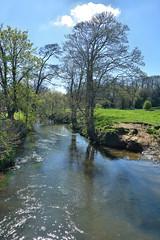 River Scene (alotroy) Tags: river riverscene tree water stream meadow