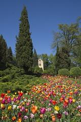 _DSC0805 (Riccardo Q.) Tags: parcosegurtàtulipani places parco altreparolechiave fiori tulipani segurtà