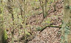 IMGP7212 (graemes83) Tags: pentax jupiter wildlife cheshire bird spring