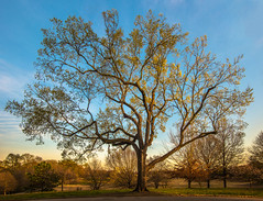 Been here a while - 2017-03-20_04 (Paul and Nalva) Tags: nx500 samsungnx500 rokinon12mmf2 piedmontpark tree 2017gnfcoc apsthemeexhibition2017