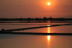black and orange (PawL23) Tags: petchaburi saltfields farming sun sunset lines water reflection goldenhour asai