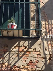 the red and white flower pot (Hayashina) Tags: italy murano texture flowerpot shadow window