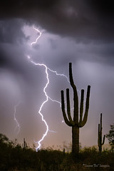 Sonoran Desert Monsoon Storming (Striking Photography by Bo Insogna) Tags: monsoon arizona sonorandesert saguaro cactus lightning weather nature landscapes phoenix tucson scottsdale insogna storms thunderstorms extremeweather climatechange severestorms arizonathunderstorms