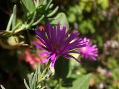 P1010155 (krolslz) Tags: flower enfoque selectivo