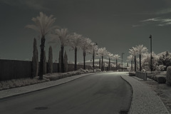 Night and day (waldo.posth) Tags: sony a5100 ir converted 750nm palm trees alley infrared