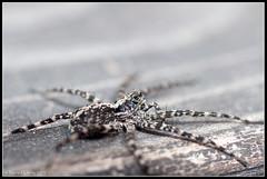 Spider (mmoborg) Tags: spider sweden sverige spindel mmoborg mariamoborg
