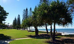 Redcliffe Beach,Queensland (scinta1) Tags: trees green beach brisbane redcliffe 2013