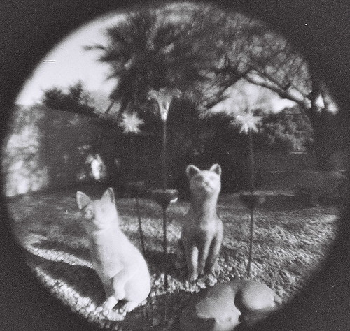 arizona bw cats baby white black film stone analog lomo lomography backyard 110 statues az fisheye round tempecamera babyfisheye fisheyebaby ldlnoir